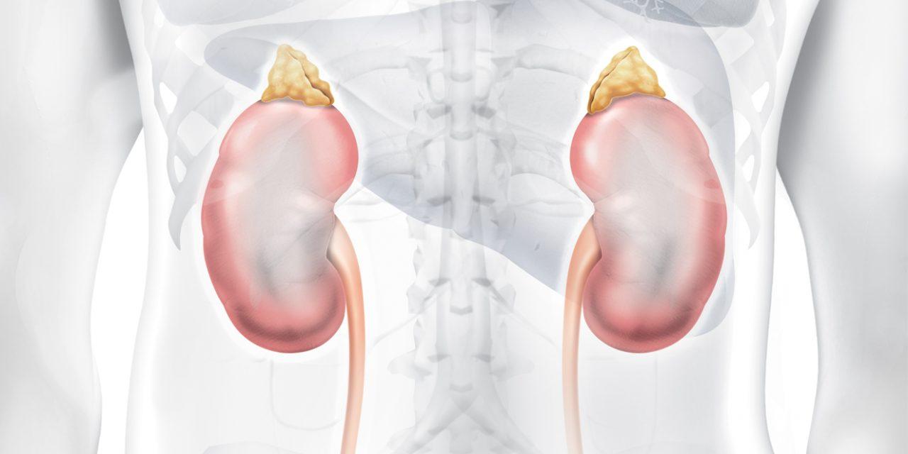 Saiba o porquê do rim ser um dos órgãos mais importantes – por Alan Castro