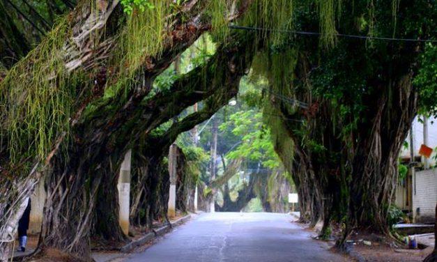 Reserva Cultural recebe III Encontro Fluminense de Arborização Urbana