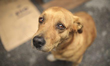 Denúncias de maus-tratos a animais podem ser feitas em delegacias