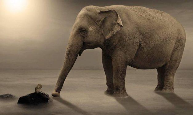 Por que o elefante tem medo do rato? – por Marco Orsini
