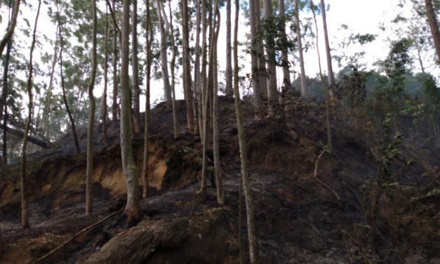 Guarda Municipal de Niterói combate incêndio no ParNit