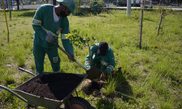 Plantio de mais 600 mudas de restinga é realizado na orla de Charitas